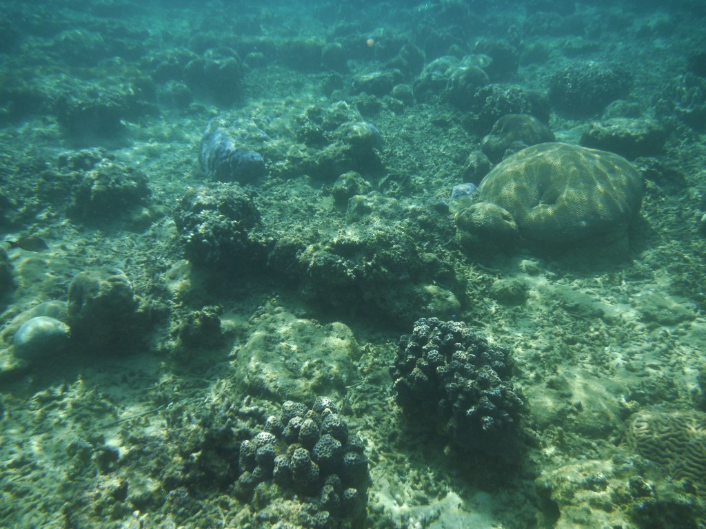 青の洞窟前の海の珊瑚