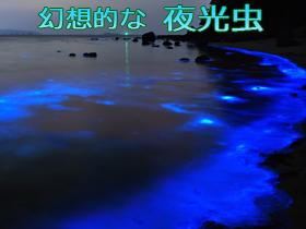 ナイトツアーでは幻想的な夜光虫も見られます。