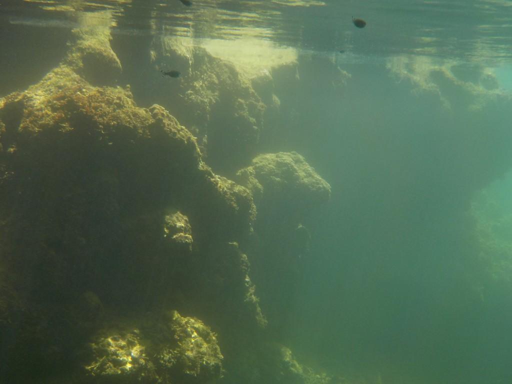 潮溜まりに差し込む光と魚