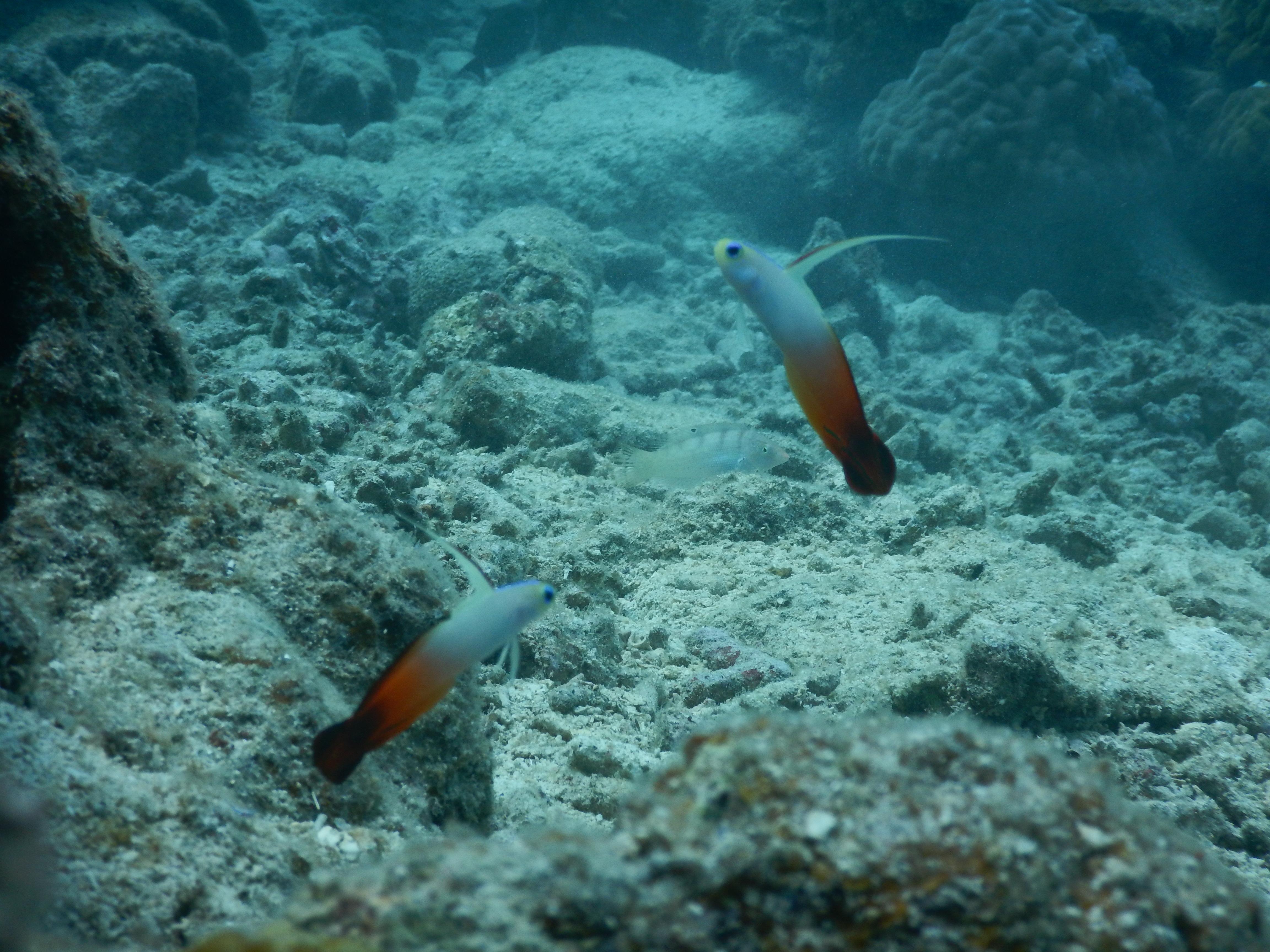 石垣島の海で見れる生物たちをご紹介!