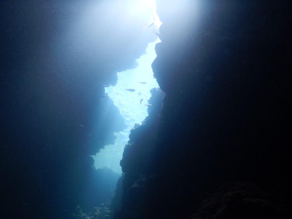 上からの光のシャワーが眩しい。魚たちのシルエットがカッコいい!!