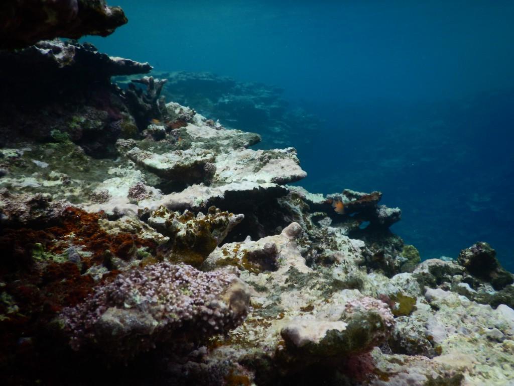 体験ダイビングで潜った海の中の様子。