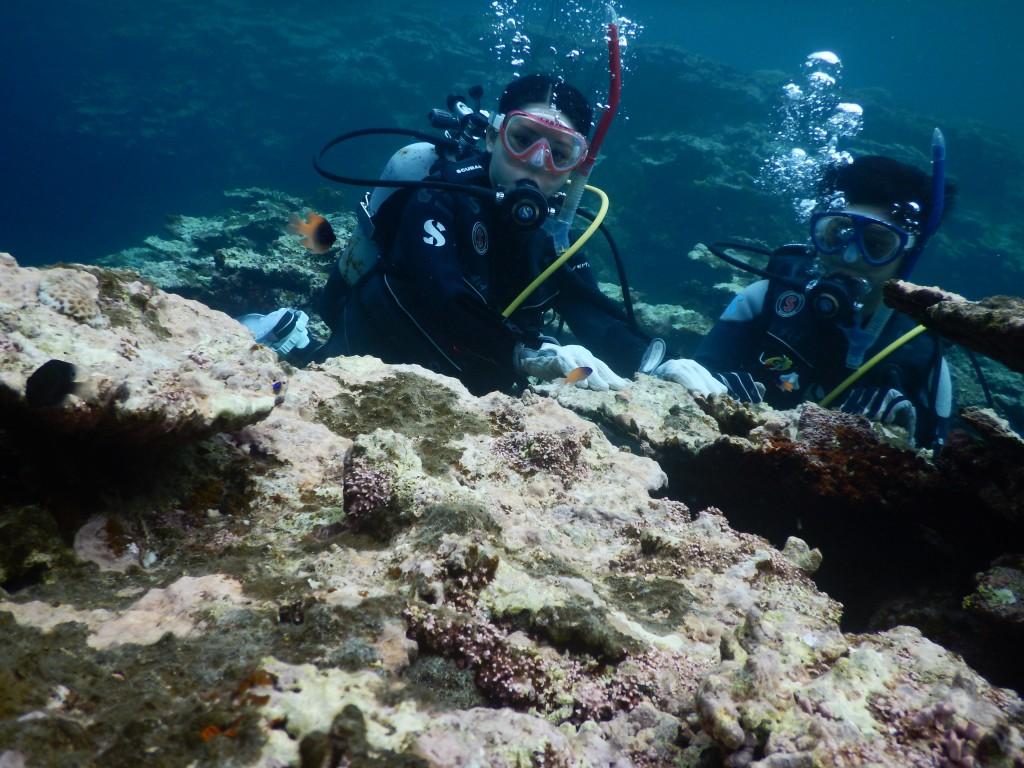 体験ダイビング中のゲスト様と小さなお魚たち