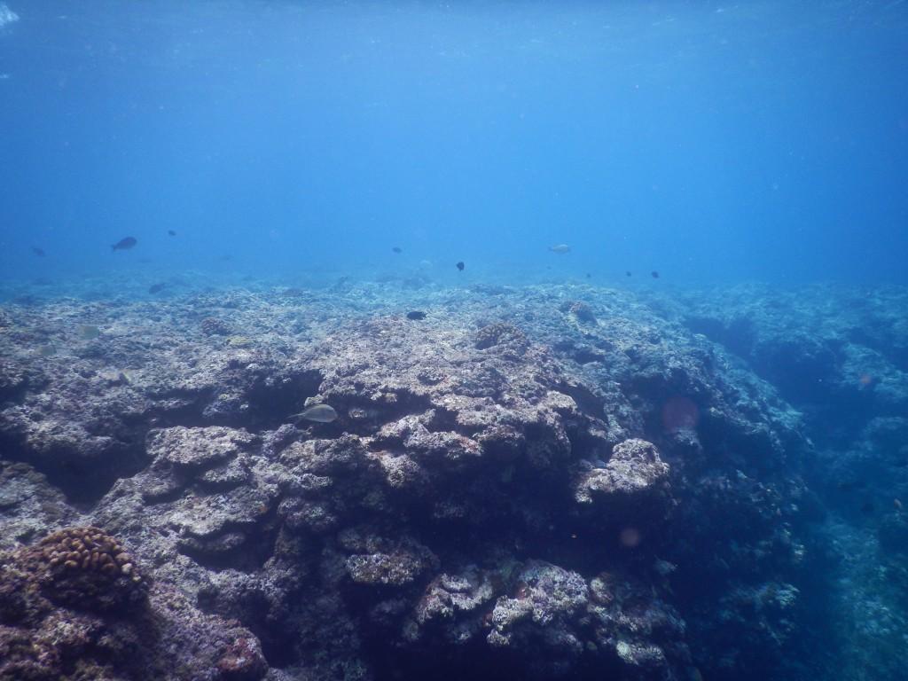 珊瑚の根と窪み
