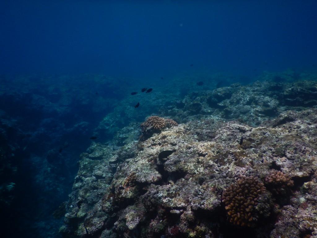 崎枝の珊瑚と魚
