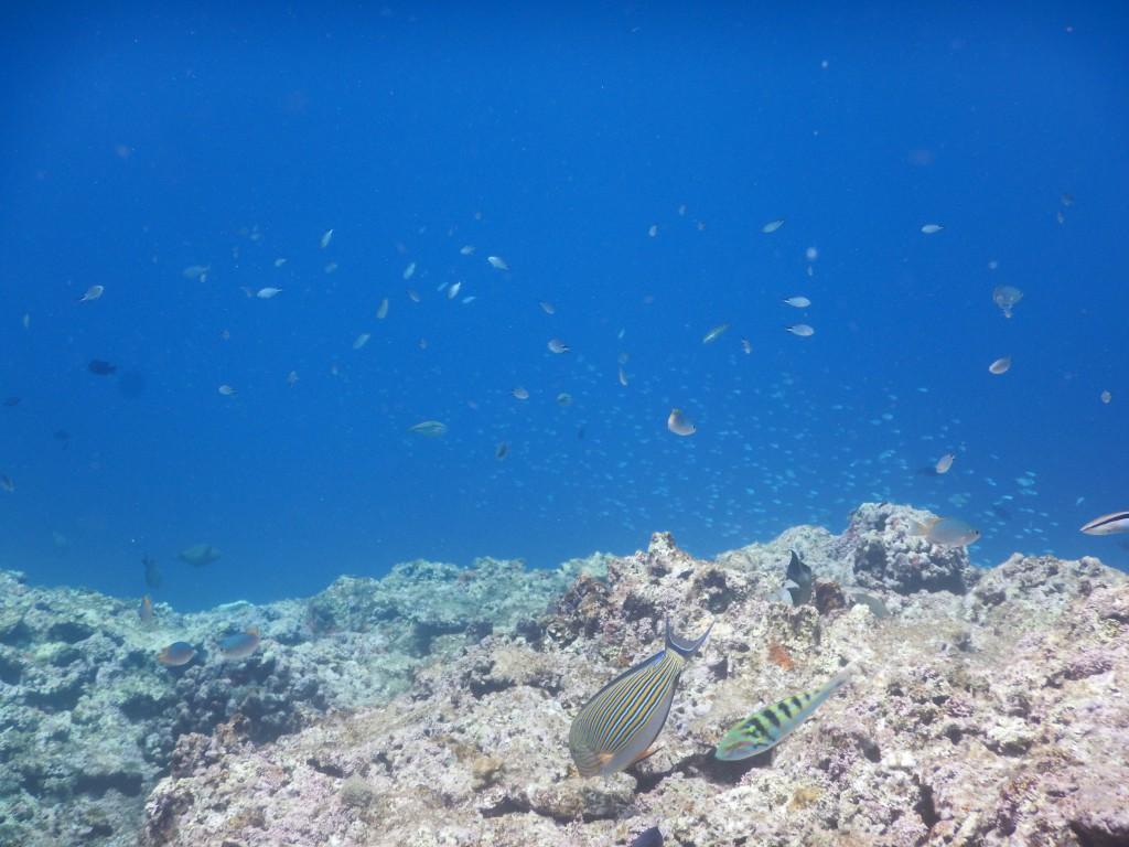 小さな魚の大きな群れ