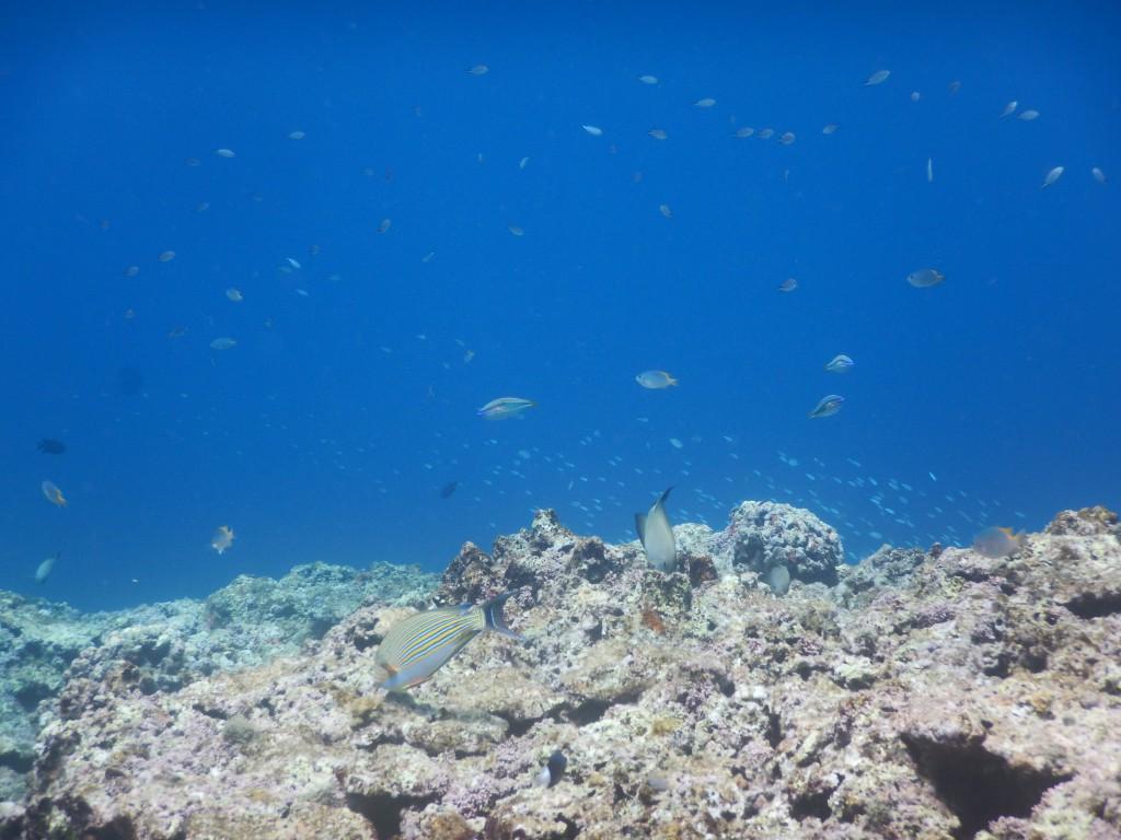 崎枝の珊瑚礁にて