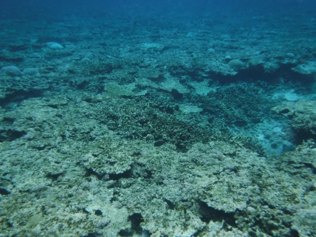 足元にはサンゴ礁が広がってます