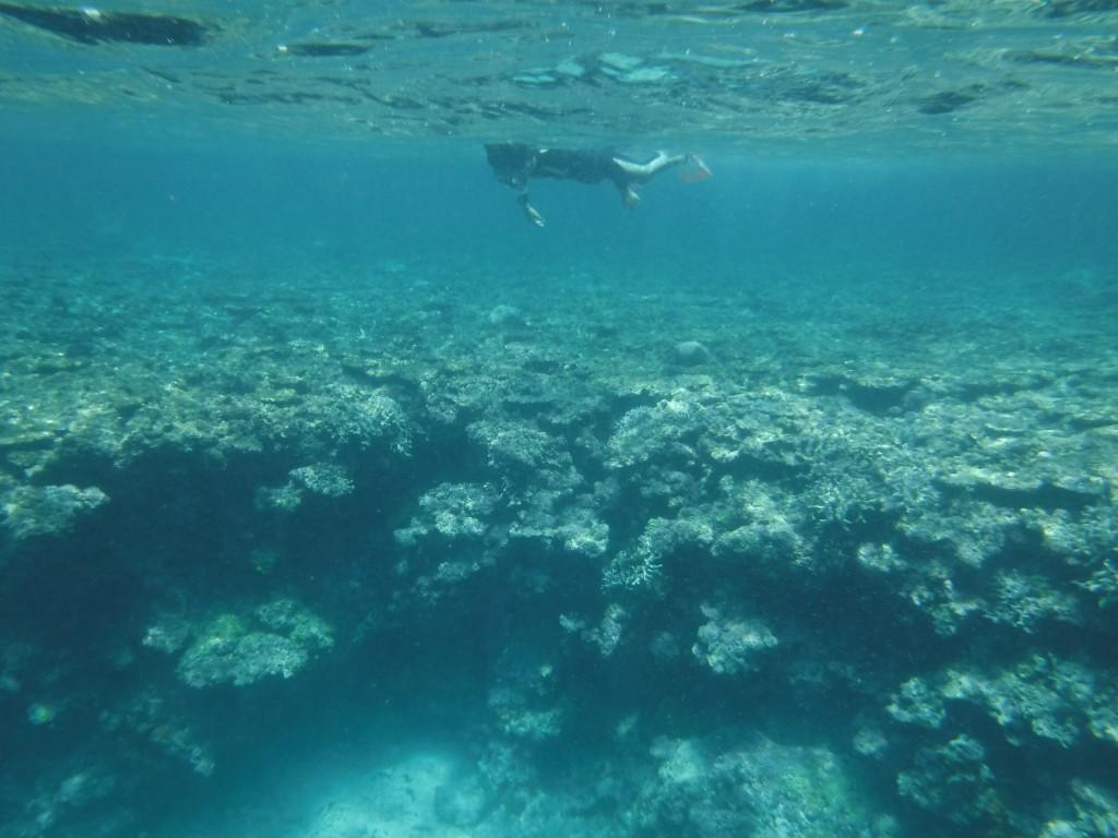 サンゴの上をシュノーケルで行く