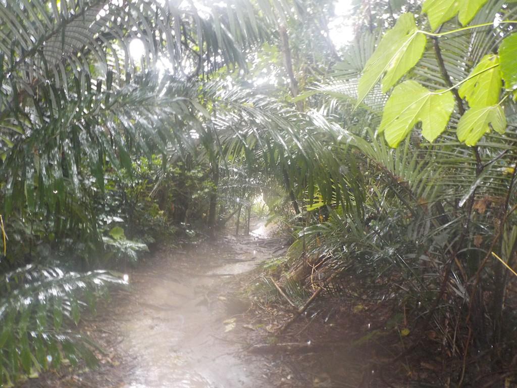 台風後のジャングルの様子