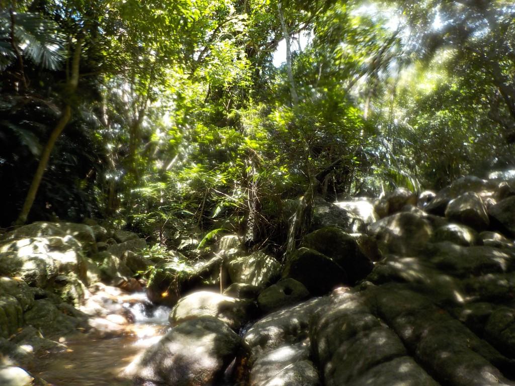 滝つぼのミニジャングル