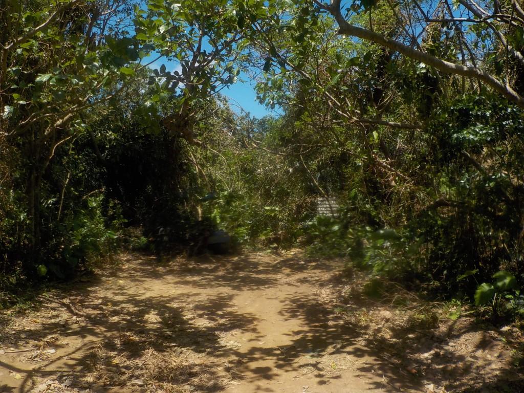 青の洞窟へ続くジャングル