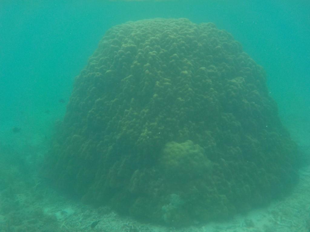 山のように大きいサンゴ
