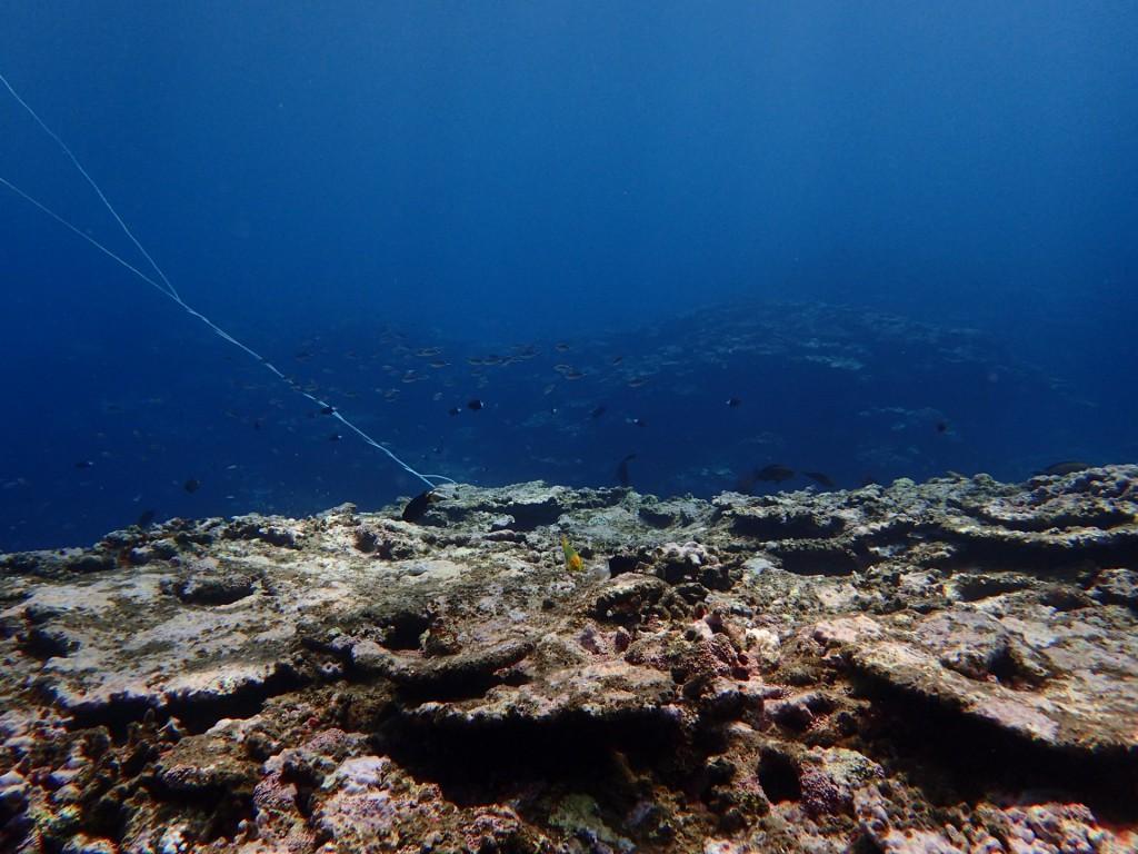 体験ダイビングで潜った海の様子