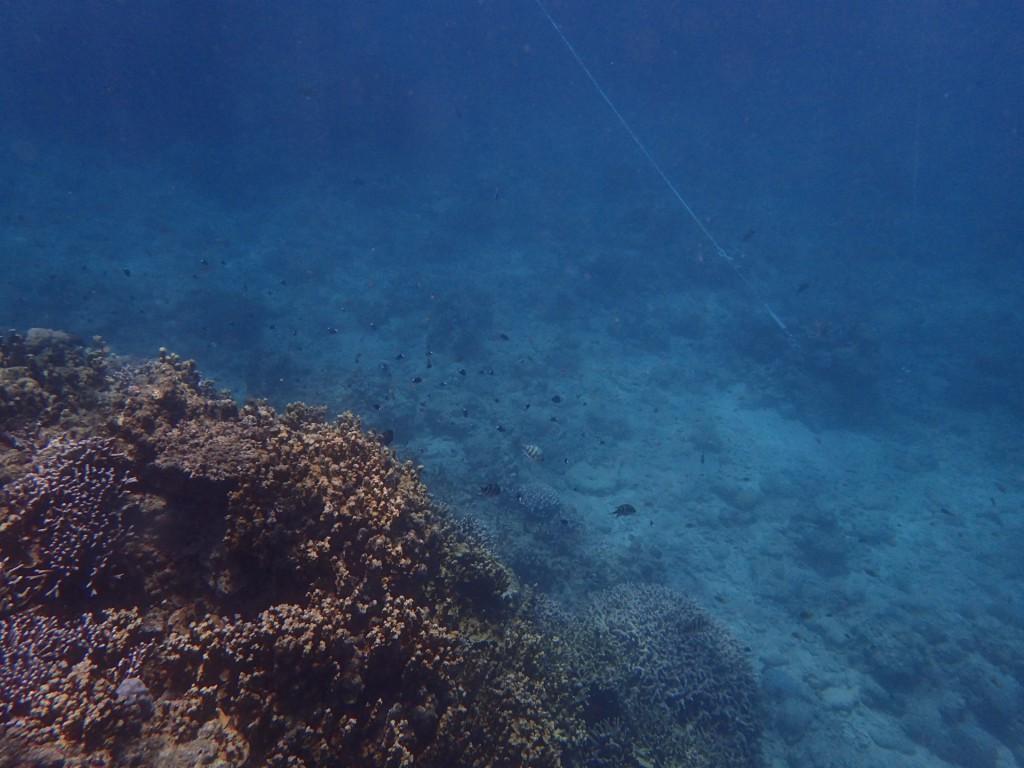 サンゴにたくさんの魚が集まってる!!