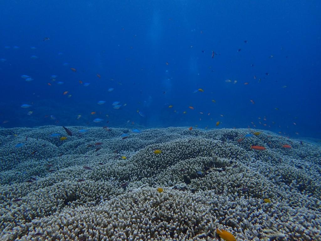 サンゴの上に無数の魚がいっぱい!