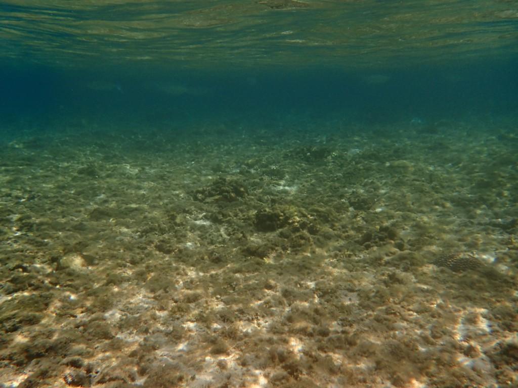 青の洞窟近くの海はこんな感じ