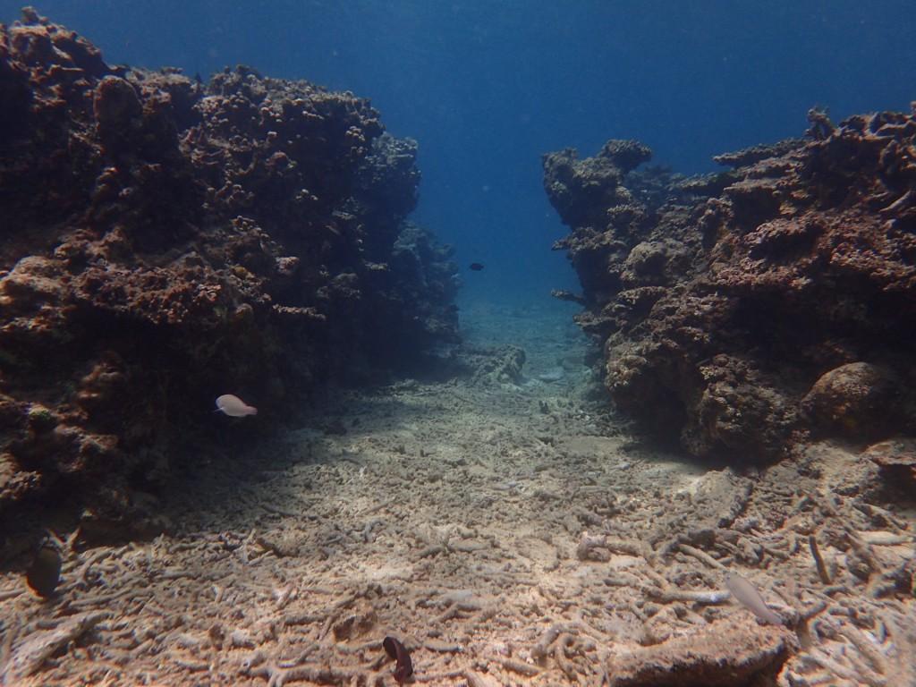 今日のダイビングポイントの海の中⭐︎