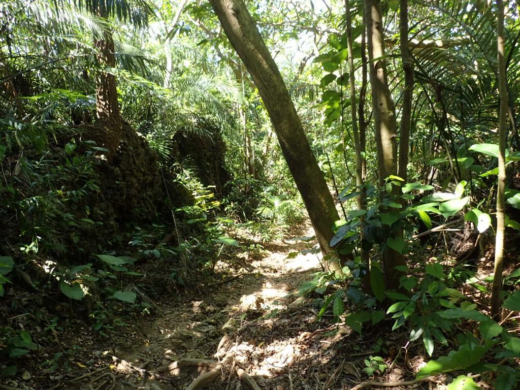 ジャングルを抜けると・・・