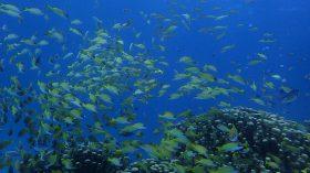 石垣島から西表島へ ダイビング