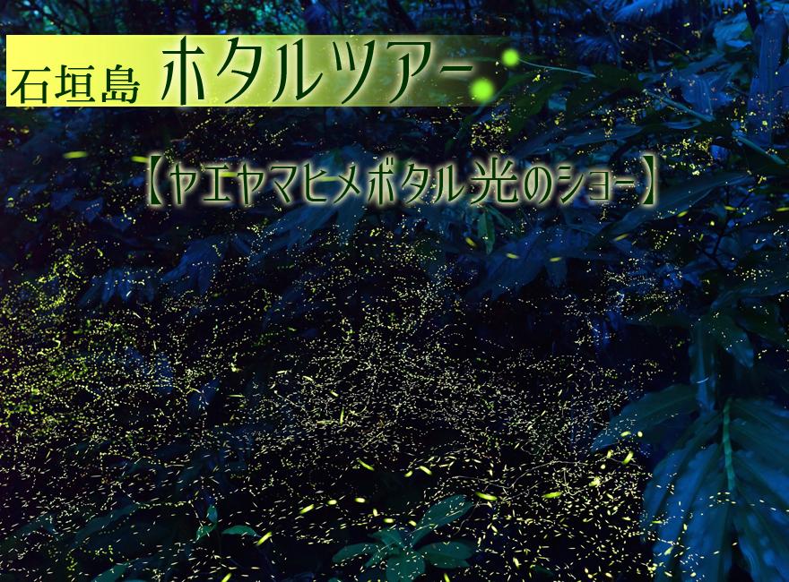 石垣島ホタルツアーのご案内
